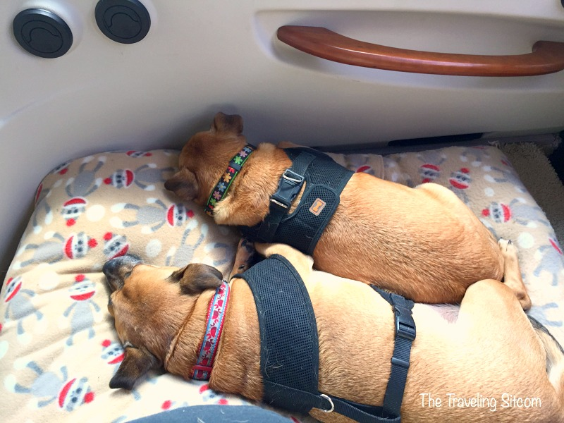 dogs traveling rv camping