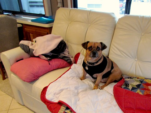 14 tips for traveling with dogs