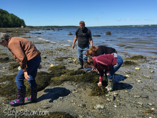hadley point maine mussel fishing