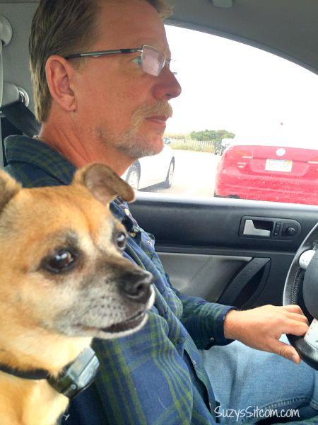 dave driving with dog