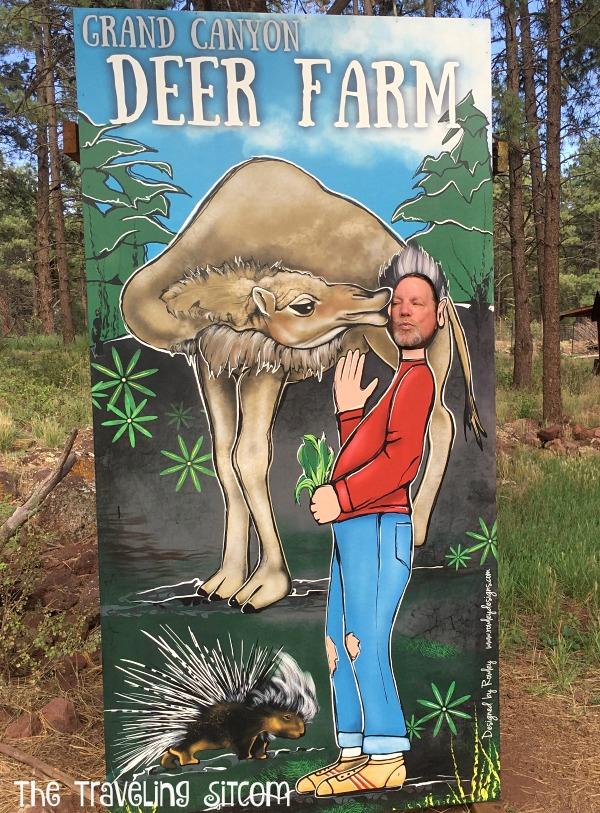 bearizona and grand canyon deer farm