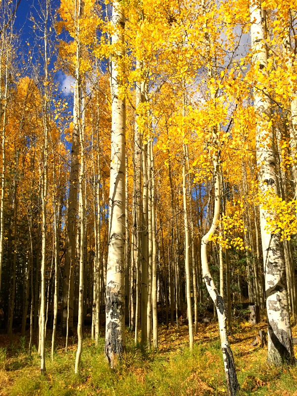 autumn-in-northern-arizona