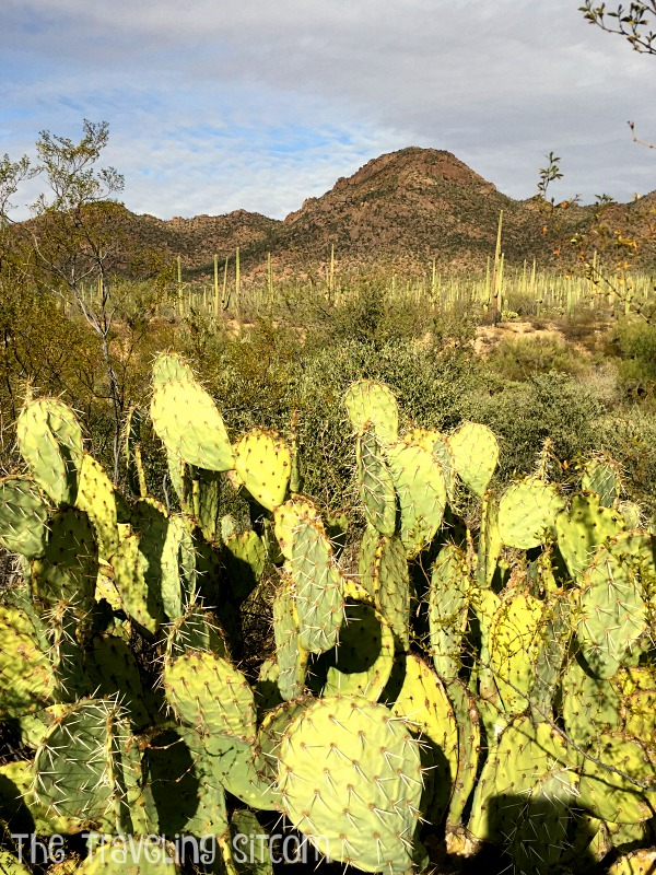 saguaro-national-park4