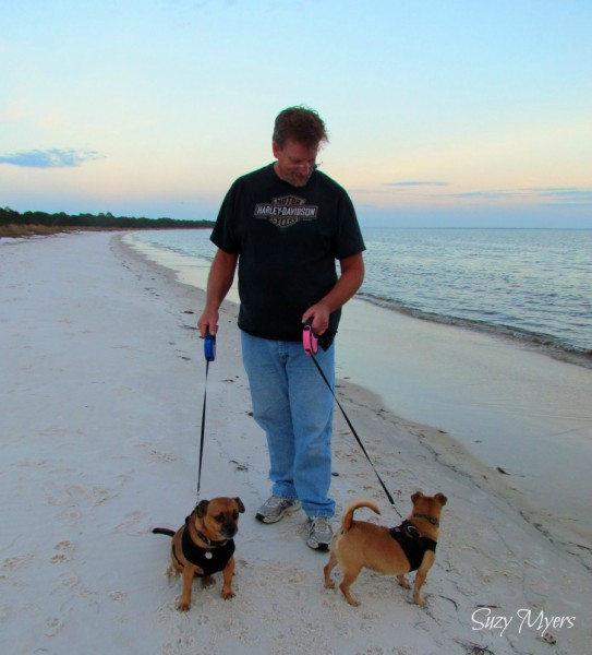 dogs at carrabelle florida beach