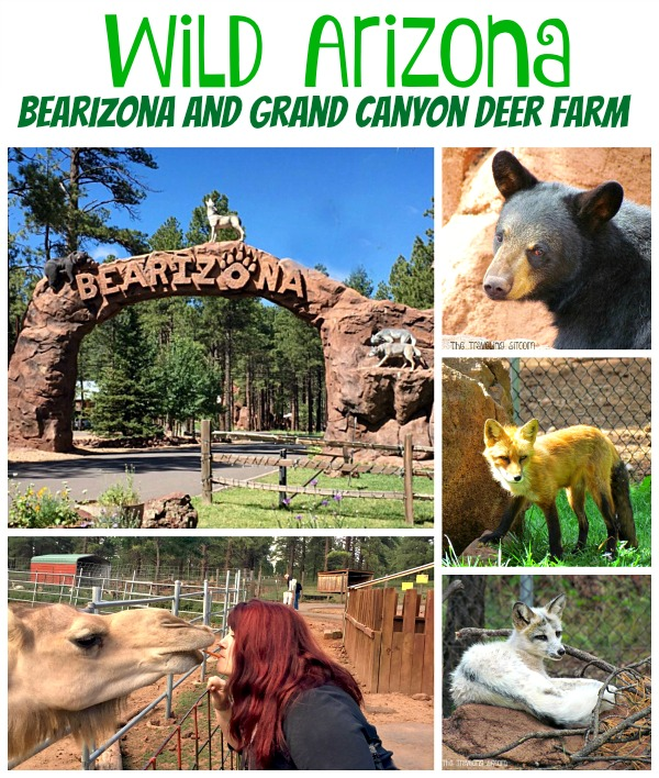 bearizona and grand canyon deer farm