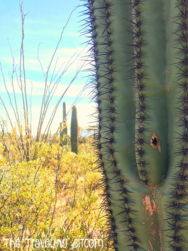 saguaro-national-park10