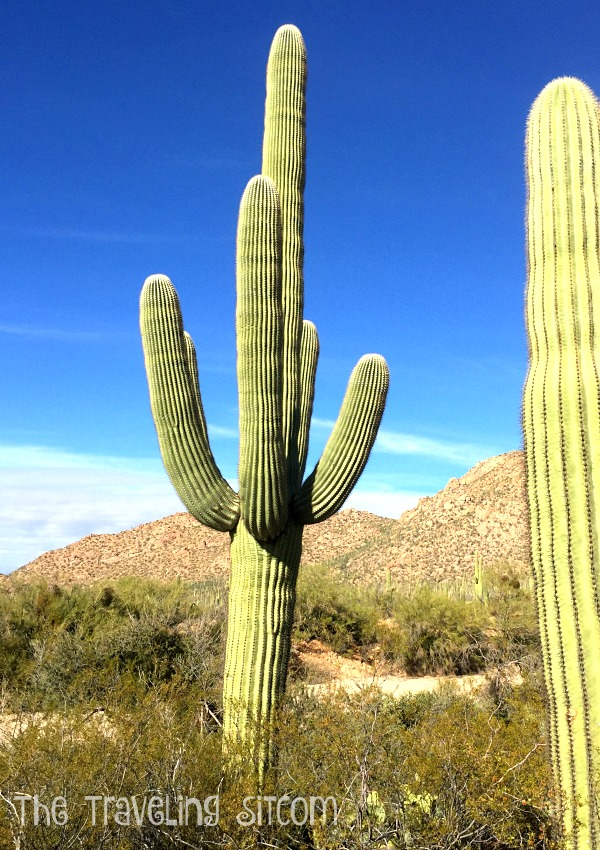 saguaro-national-park11