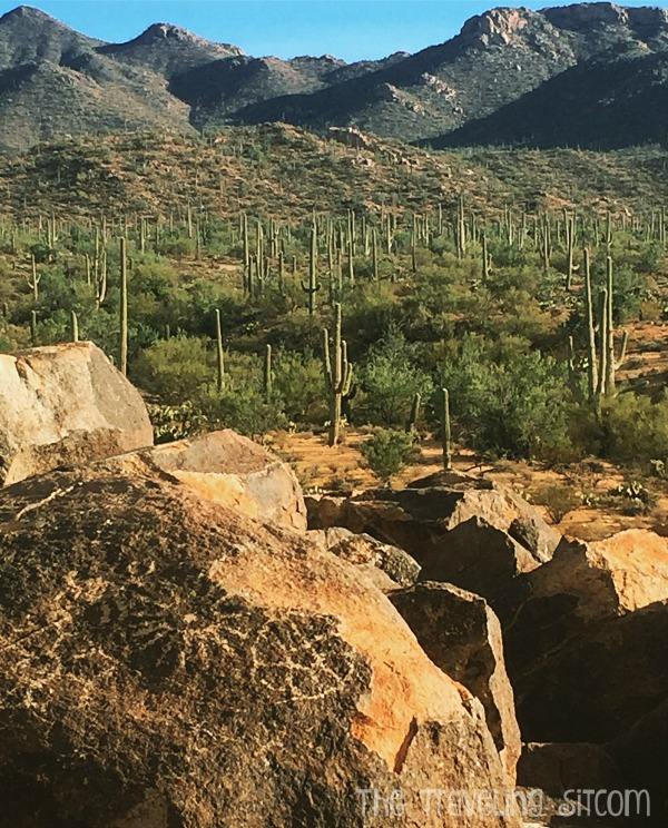saguaro-national-park15