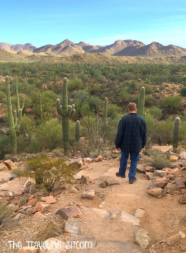 saguaro-national-park16