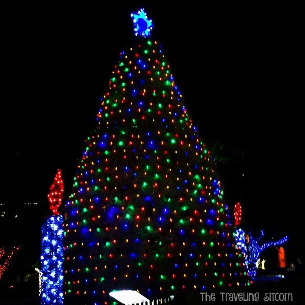 tumbleweed-christmas-tree-chandler-arizona-6