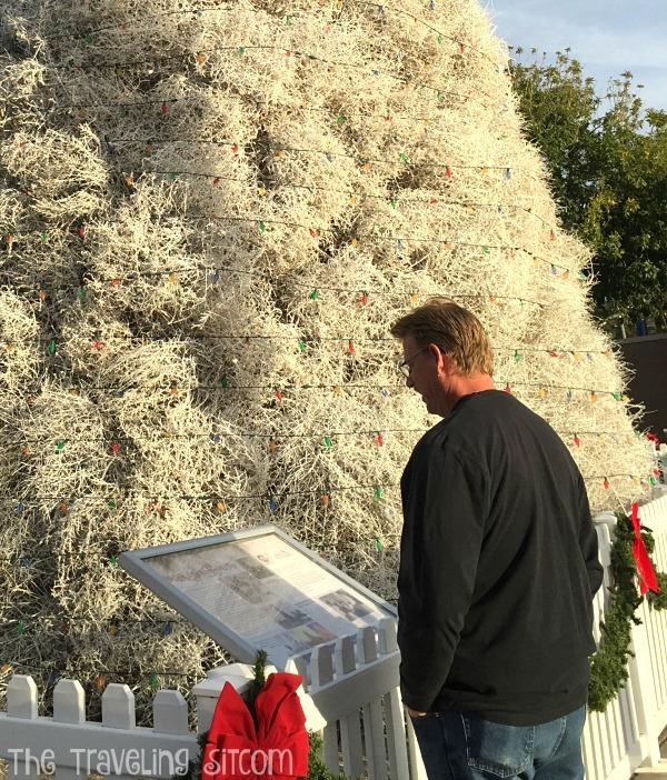 tumbleweed-christmas-tree-chandler-arizona-8
